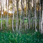 perex_breza